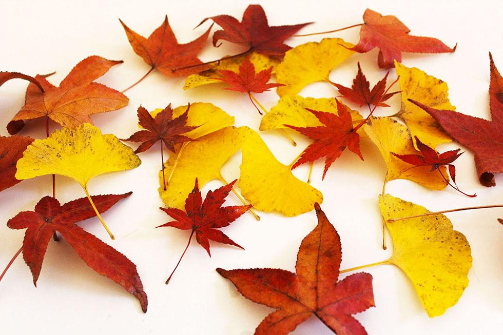 まとめ紅葉のフリー写真素材集イラストフォト